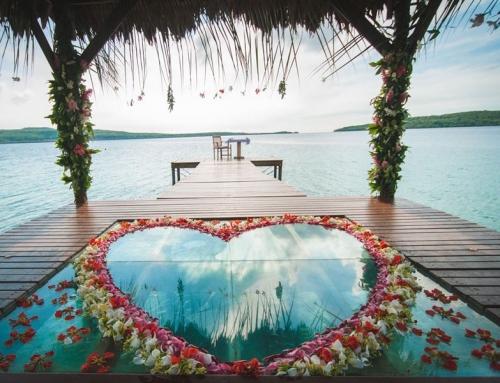 Wedding & Honeymoon Evening